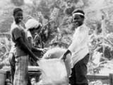 Bagging produce